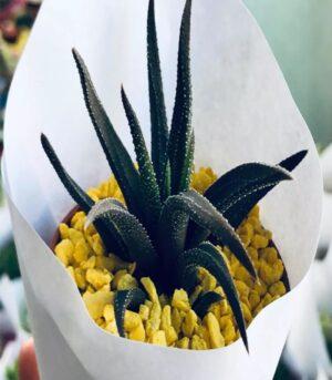 CactusYSuculentas002